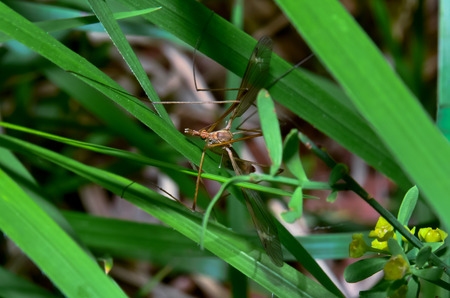 Macro photograph of a daddy long legs in the foreground photo