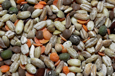 large group of items: Close up of some legumes and cereals mixed as alimentary concept Stock Photo