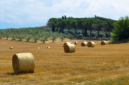 Landscape with bales of hay as a concept of summer Stock Photo