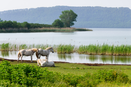 A view of Lake Vico in Italy with three specimens of white horses