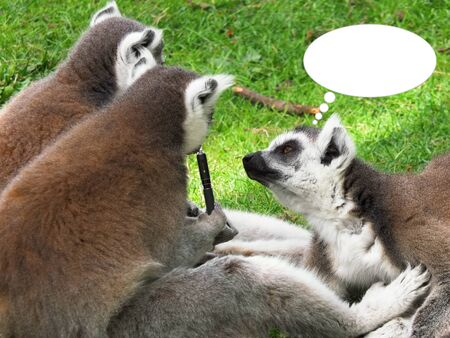 irony: Funny picture with some Lemurs who smoke the electronic cigarette as a concept of irony