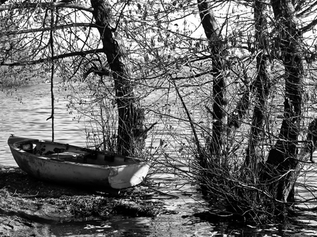 Close up in black and white of a boat beached in the trees