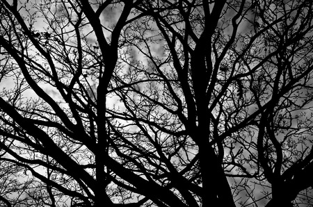 Close up of a tangle of bare branches in black and white