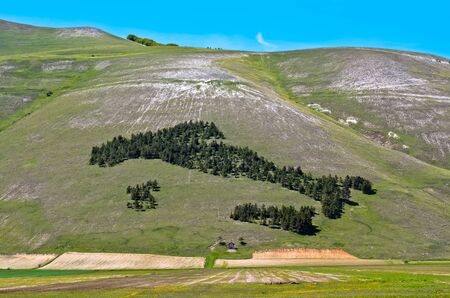 Close up of Italy trees in Castelluccio of Norcia