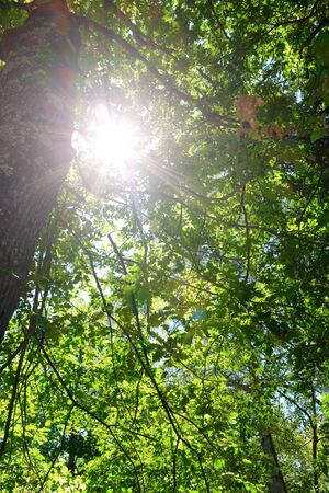 Sunlight passing through the leaves of trees