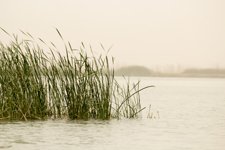 marshes: Image marshes of Iraq in Dhi Qar province, which is located south of Iraq, Show where water bodies and Cane papyrus.