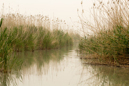 iraq: Image marshes of Iraq in Dhi Qar province, which is located south of Iraq, Show where water bodies and Cane papyrus.