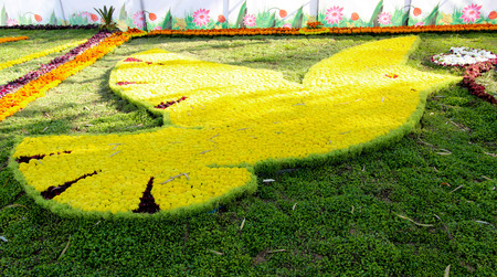 annually: Image of Gallery of flowers in Baghdad for 2015, which is held annually in Zora Park in central Baghdad. Stock Photo