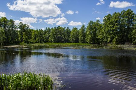 overflows: Russian nature, river overflows, summer birds are singing