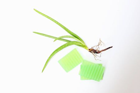 Fresh aloe vera plant with root and aloe vere glycerin handmade soaps on white background.