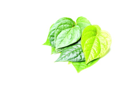 Piper betel leaves on white background. This is an evergreen plant with heart-shaped leaves. Petel plant originated in South and South East Asia. Stock Photo