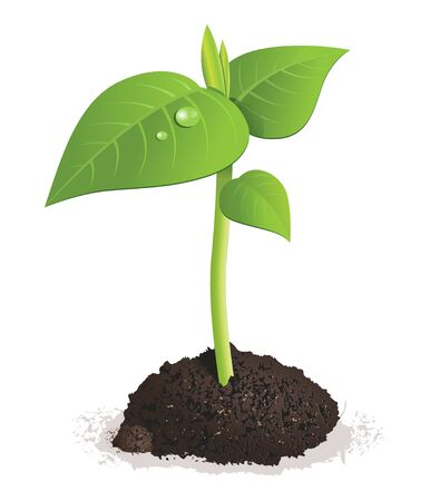 Illustration of green fresh sprout in the soil