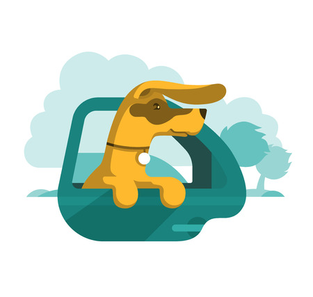 Dog with medal on the neck is looking out of the open window of moving car