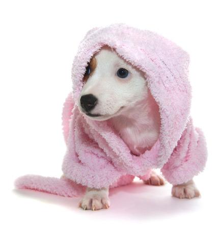 Puppy in een roze badjas na een spa-behandeling