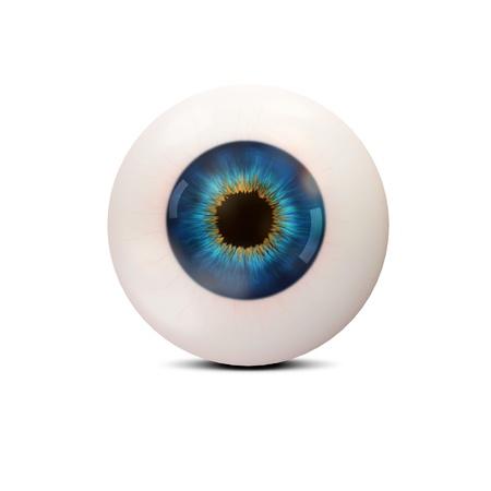 globo ocular: Ojo humano sobre fondo blanco