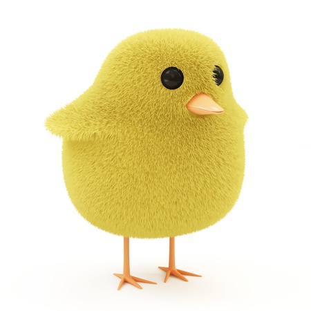 Easter Little Chicken isolated on white background