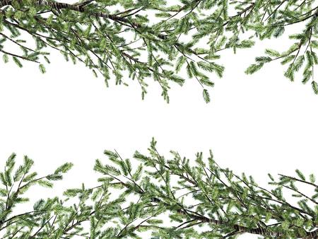 Ramas de pino aisladas sobre fondo blanco. Representación 3D