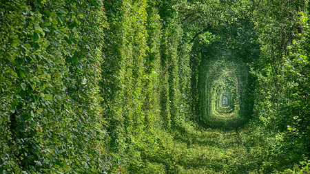 A Unique Natural Tunnel of Love with Railway Road formed by Trees in Ukraine