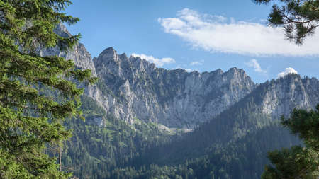 Amazing Bavarian Alps Landscape with Pine Trees Stok Fotoğraf
