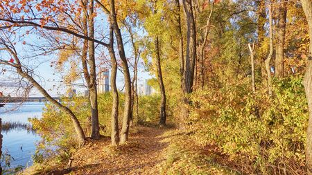 Peaceful Autumn Park with River and Falling Leaves from the Trees