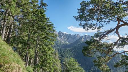 Amazing Bavarian Alps Landscape with Pine Trees 版權商用圖片