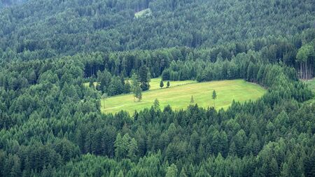 Beautiful Aerial Scene of an empty meadow in the alpen forest