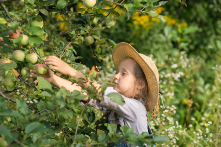 Girl harvesting apples during fall gardening