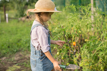 Girl harvesting tomato during fall gardening Stockfoto