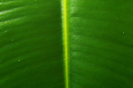 Texture of green leaf light background, closeup Stock Photo