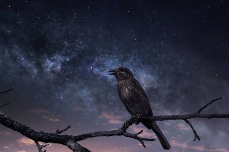 Singing bird against the starry sky with first rays of sunrise Stock fotó