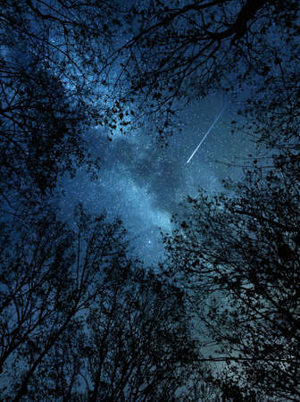 Beautiful starry night sky and meteor above the trees Stock fotó