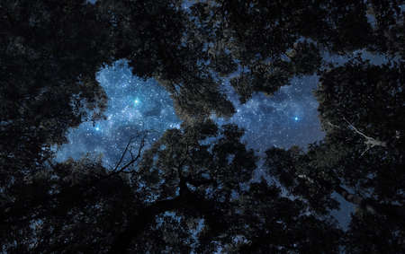 A picture of starry night sky over the tree tops