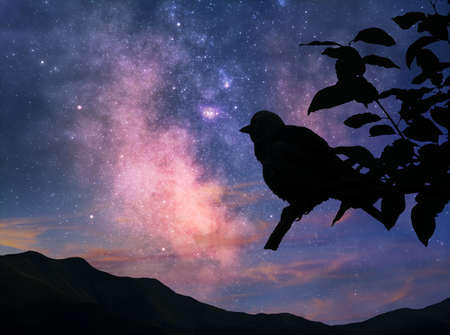 Silhouette of a bird on a branch against the Milky Way and morning sky