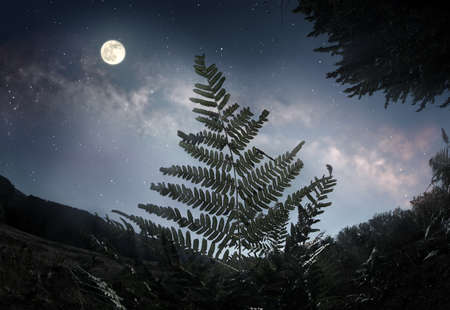 Fern leaf against the starry night sky and full moon