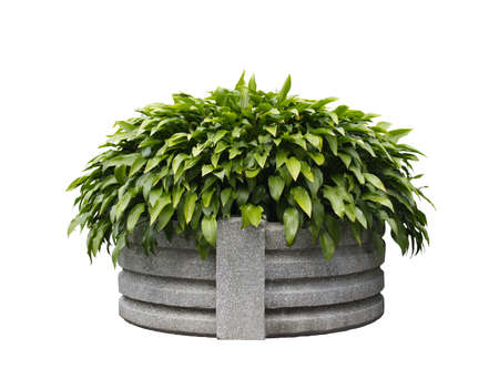 A picture of planter against white background. Clipping path included