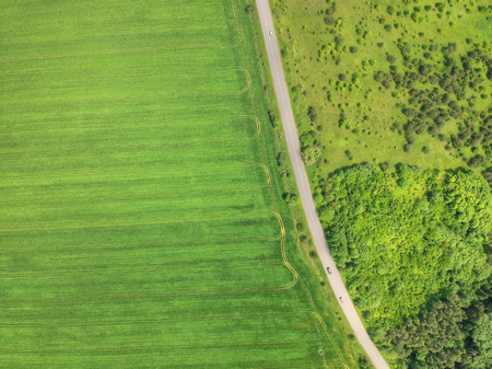 Aerial picture of the green grain field and country road Banque d'images