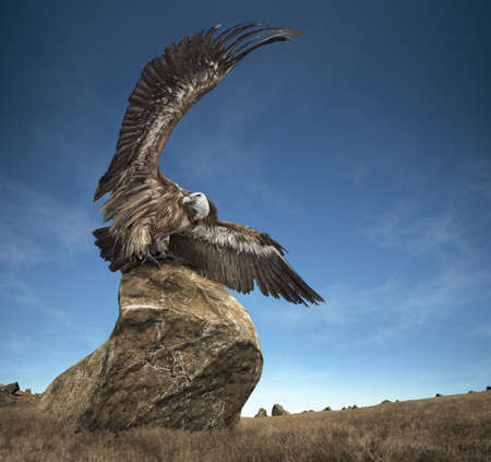 A picture of the griffon-vulture sitting on a stone and spreading wings