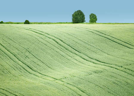 A picture of the wavy grain field