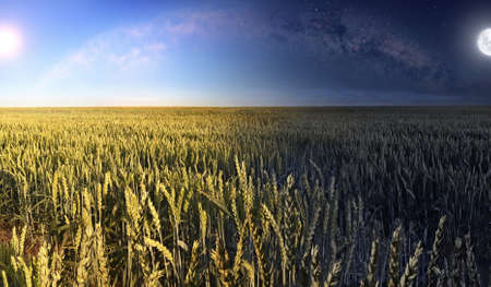 A picture of the wheat field in the daytime and in the nighttime