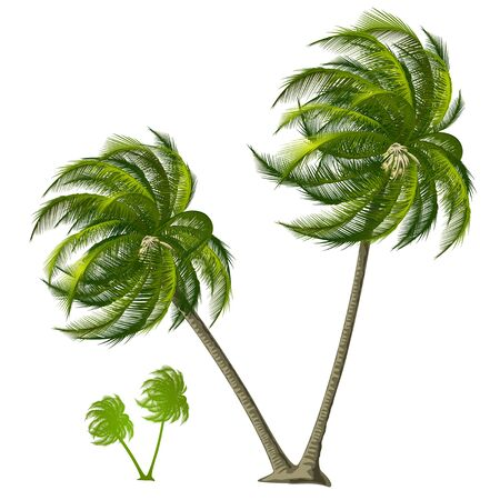 Palm Tree Stock Photo - 9594124
