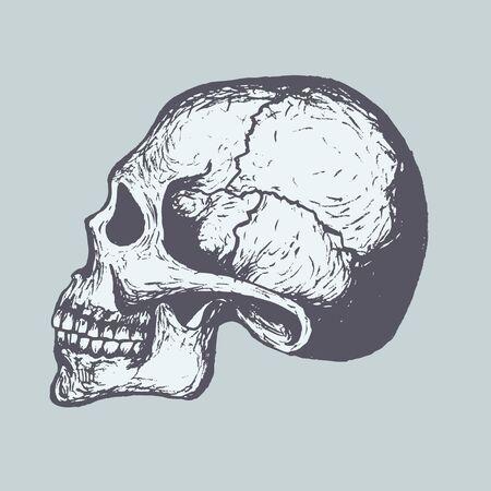 レトロ: 人間の頭蓋骨