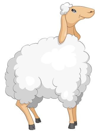 ovejita bebe: Ovejas de personaje de dibujos animados aisladas sobre fondo blanco.