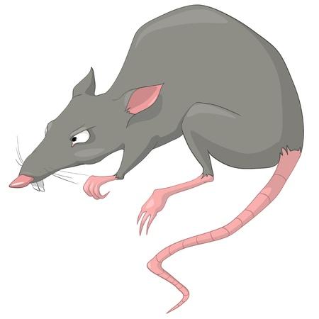 rata caricatura: Rata de la historieta personajes Vectores
