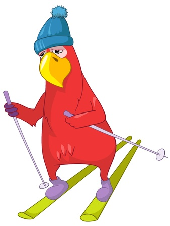 Funny Parrot  Skiing  Vector