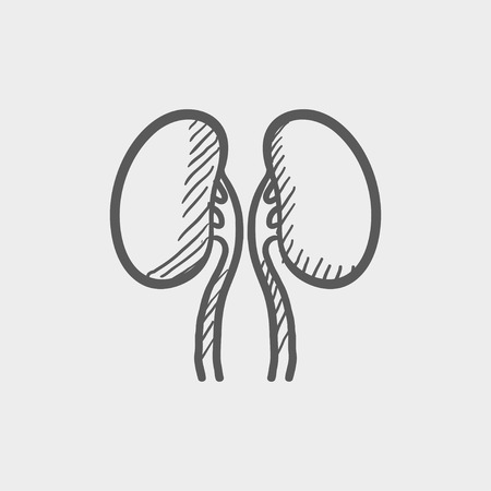 kidney bean: Human kidney sketch icon for web and mobile. Hand drawn vector dark grey icon on light grey background.