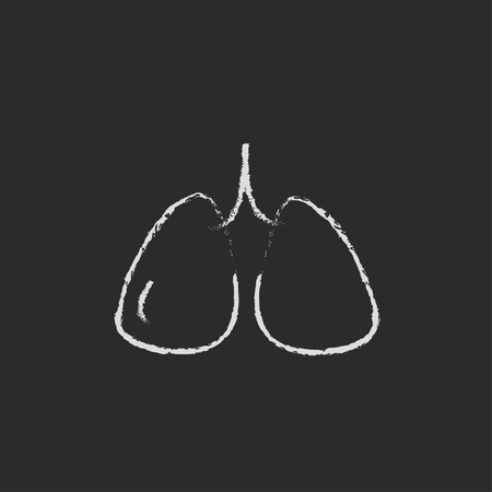 alveolus: Lungs hand drawn in chalk on a blackboard vector white icon isolated on a black background. Illustration