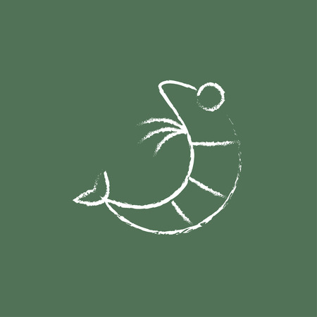 shrimp: Shrimp hand drawn in chalk on a blackboard vector white icon isolated on a green background.