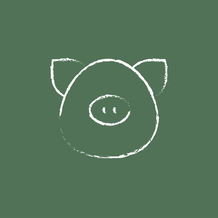 pigling: Pig head hand drawn in chalk on a blackboard vector white icon isolated on a green background. Illustration