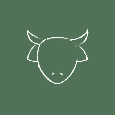 Cow head hand drawn in chalk on a blackboard vector white icon isolated on a green background.