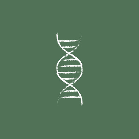 dna chain: DNA hand drawn in chalk on a blackboard vector white icon isolated on a green background.